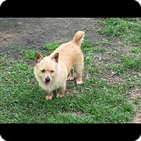 Terrier (Unknown Type, Small) Dog for adoption in Splendora, Texas - Pickles/Pixie