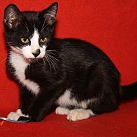 Adopt A Pet :: Elvis - Marietta, OH