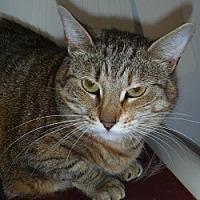 Adopt A Pet :: Rose - Hamburg, NY