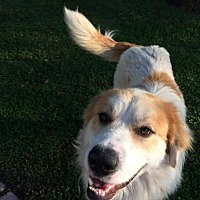 Adopt A Pet :: Max - Natchitoches, LA