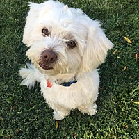 Adopt A Pet :: Max-Adopted! - Tracy, CA