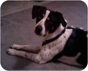 Border Collie Mix Dog for adoption in College Station, Texas - Fritz