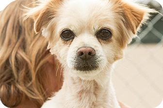 Spaniel (Unknown Type) Mix Dog for adoption in Acton, California - Rocky