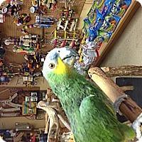 Adopt A Pet :: Oscar - Punta Gorda, FL