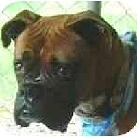 Adopt A Pet :: Ava - North Haven, CT