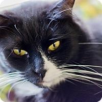 Adopt A Pet :: Benny - Chesapeake, VA