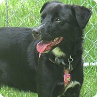 Adopt A Pet :: NOLA - Jacksonville, FL