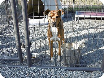 Collie Mix Dog for adoption in Barco, North Carolina - Lucy
