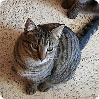 Adopt A Pet :: Simba - San Fernando Valley, CA