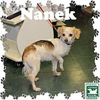 Adopt A Pet :: Nanek - Fallston, MD