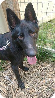 German Shepherd Dog Mix Dog for adoption in Baltimore, Maryland - Kane