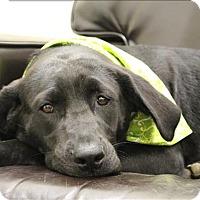 Adopt A Pet :: Jasmine - Neosho, MO
