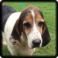 Adopt A Pet :: Slim - Marietta, GA