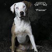 Adopt A Pet :: Prancer - Acton, CA