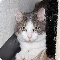 Adopt A Pet :: Edward - Martinsville, IN