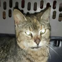 Adopt A Pet :: Coriander - Baltimore, MD