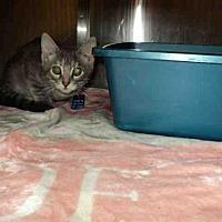 Adopt A Pet :: MALIA - Olivette, MO
