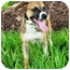 Photo 3 - Pug Mix Dog for adoption in Sugar Land, Texas - Sweet Pea
