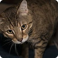 Adopt A Pet :: Swisher - Lombard, IL