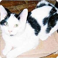 Adopt A Pet :: Jocomo - cincinnati, OH