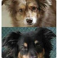Adopt A Pet :: Wallace & Gommit - Orlando, FL