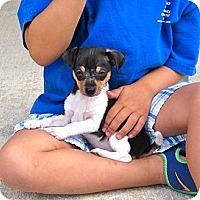 Adopt A Pet :: TADPOLE - Loxahatchee, FL
