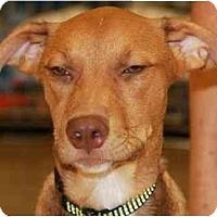 Adopt A Pet :: Spud - Gilbert, AZ