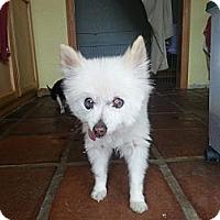 Adopt A Pet :: Kenny G - Acton, CA