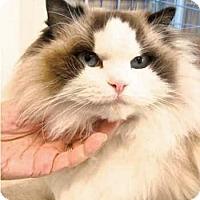 Adopt A Pet :: Monrou - Davis, CA