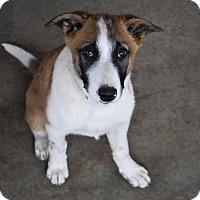 Adopt A Pet :: Tony - Seattle, WA