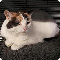 Adopt A Pet :: Missus - Barrie, ON