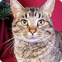 Adopt A Pet :: Owen - Colfax, IA