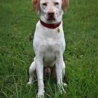 Adopt A Pet :: Cashew - Sarasota, FL