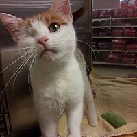 Adopt A Pet :: Isabel - Baltimore, MD