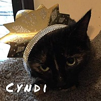 Adopt A Pet :: Cyndi - Pittsburgh, PA