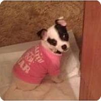 Adopt A Pet :: EJ - Fresno, CA
