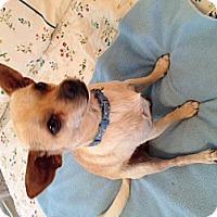 Adopt A Pet :: Timmie - San Antonio, TX