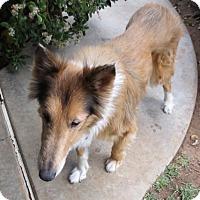 Adopt A Pet :: Vanilla - Rancho Cucamonga, CA