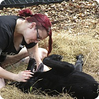 Adopt A Pet :: Trinity - Green Cove Springs, FL
