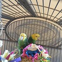 Adopt A Pet :: Sam & Max - DYH - Blairstown, NJ