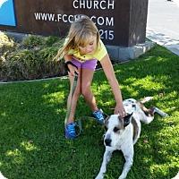 Adopt A Pet :: Nina - Santa Monica, CA