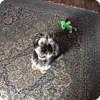 Adopt A Pet :: Amelia - San Diego, CA