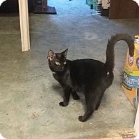 Adopt A Pet :: Barbara and kittens - Parkton, NC