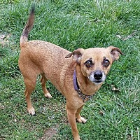 Adopt A Pet :: Oscar - Crossville, TN