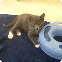 Adopt A Pet :: Harrison - Trenton, NJ