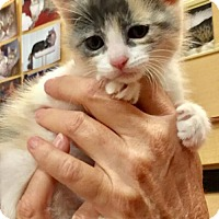 Adopt A Pet :: *SARAFINA - Sacramento, CA