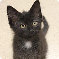 Adopt A Pet :: Jesse - Naperville, IL