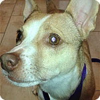 Adopt A Pet :: Kyle by Appointment - Oswego, IL
