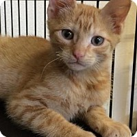 Adopt A Pet :: Petre - Bryan, TX