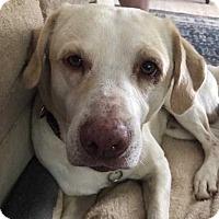 Adopt A Pet :: Dublin - Charleston, SC